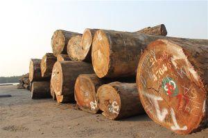 1.000 container và hàng nghìn m3 gỗ nằm lại cảng Hải Phòng vì kiểm dịch 'tuýt còi'