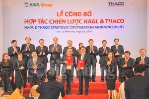 THACO đầu tư hàng chục nghìn tỷ đồng vào Hoàng Anh Gia Lai