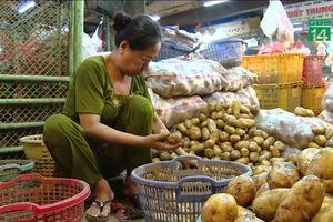 Khoai tây Trung Quốc 'đội lốt' khoai tây Đà Lạt