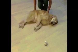 Khoảnh khắc chó siêu lầy khiến dân mạng cười nghiêng ngả