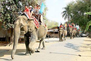 Mô hình du lịch thân thiện cùng voi