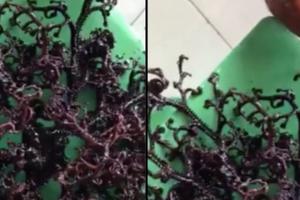 Sinh vật biển bí ẩn tìm thấy ở Kiên Giang lên báo nước ngoài