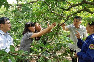 HLV Thái Nguyên: Phong trào tốt, hội viên làm giàu