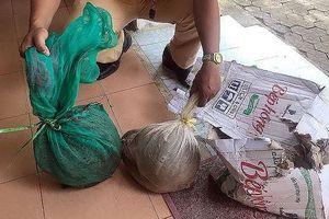 Bắt xe khách chở động vật hoang dã trái phép tại Quảng Nam