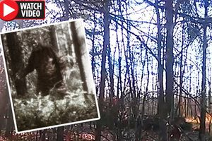 Ghi được tiếng gầm nghi là của quái vật Bigfoot