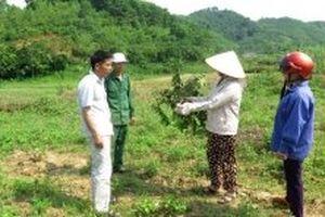 Nhiều vườn cây ăn quả ở Tuyên Quang bị kẻ xấu phá hoại