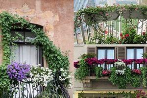 Trồng và chăm sóc cây hoa ngoài ban công cần lưu ý những gì?