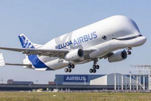 'Cá voi bay' Beluga XL cất cánh lần đầu tiên