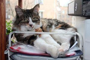 Những chú mèo nổi tiếng 'làm việc' cho các viện bảo tàng ở Nga