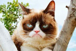 6 chú mèo kiếm nhiều tiền nhất thế giới nhờ mạng xã hội