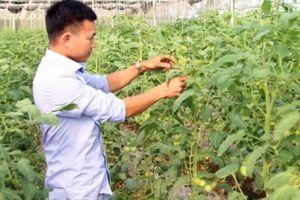 Trai đẹp bỏ lương 10 triệu về quê làm vườn rau sạch '5 không'
