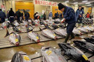 Chợ đấu giá cá ngừ nổi tiếng Nhật Bản 'điêu đứng' vì nắng nóng
