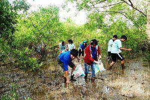 Sóc Trăng: Quan tâm bảo vệ và phát triển rừng phòng hộ ven biển