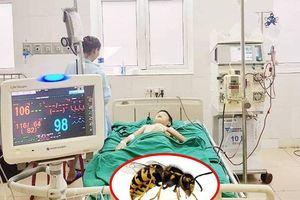 Cháu bé bị ong vò vẽ đốt 100 nốt dẫn tới suy đa tạng