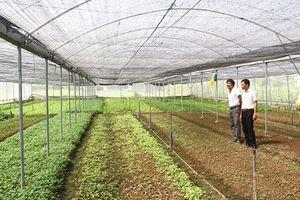 Hiệu quả ứng dụng khoa học, công nghệ trong sản xuất nông nghiệp ở huyện Hoằng Hóa