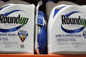 Chờ phán quyết của tòa án Mỹ về chất diệt cỏ của Monsanto có thể gây gây ung thư