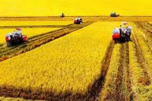Cấp sổ đỏ chung cho 2 mảnh đất nông nghiệp cùng địa phương