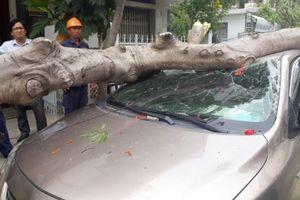 Bị cây phượng đổ trúng, ô tô 4 chỗ bẹp dúm