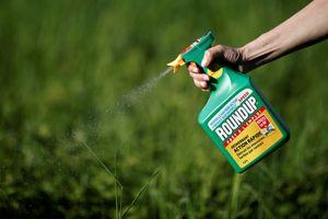 Đang xem xét loại bỏ sản phẩm có hoạt chất glyphosate của Monsanto