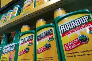 Anh: Cân nhắc ngừng bán thuốc diệt cỏ của Monsanto