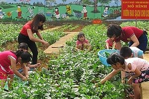 Những vườn rau sạch cho trẻ mầm non