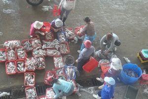 Đà Nẵng tăng cường tuyên truyền chống khai thác hải sản bất hợp pháp