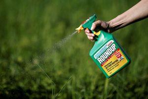 Thuốc diệt cỏ glyphosate đang bị lạm dụng ở Việt Nam: Độc hại tới mức nào?