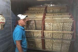 Nuôi 8.000 con gà Lạc Thủy quý hiếm, thu tỷ đồng năm