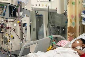 Gia đình 5 bà cháu bị ong vò vẽ tấn công, 2 người chết