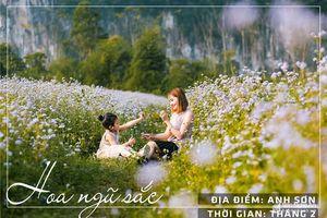 Những đồng hoa nổi tiếng nhất Nghệ An đủ chụp ảnh suốt bốn mùa