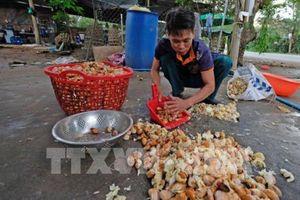 Giá hạt sầu riêng tại Lâm Đồng đã lên mức 90.000 đồng/kg