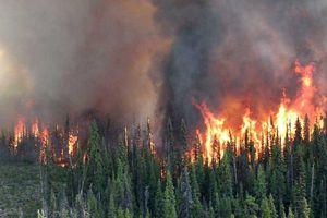 Canada ban bố tình trạng khẩn cấp vì cháy rừng ở British Columbia
