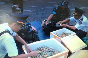 Bộ Tư lệnh vùng Cảnh sát biển 1 bắt giữ 30 kg pháo nổ