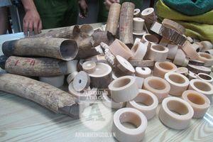 Cận cảnh lượng ngà voi 'khủng' vừa bị Công an TP Hà Nội thu giữ