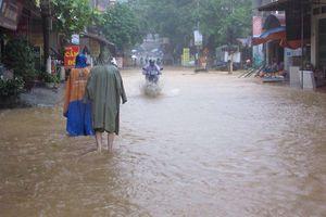 'Thủ phủ' na ở Lạng Sơn chìm trong biển nước