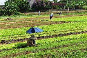 Phát triển kinh tế theo hướng nâng cao năng suất, chất lượng, hiệu quả ở huyện Thạch Thành