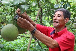Giải pháp phát triển cây ăn quả bền vững khu vực Nam Bộ