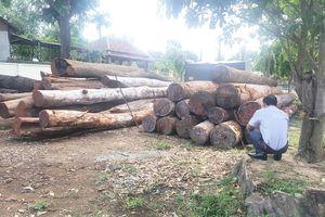Vụ bắt giữ trùm gỗ lậu Phượng 'râu': Kiểm điểm nhiều cán bộ kiểm lâm