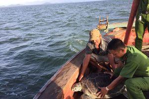 Thả rùa biển nặng 60kg về môi trường tự nhiên