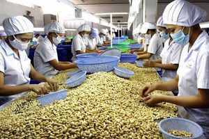 Nhiều nông sản xuất xứ Việt Nam sẽ không được hưởng thuế suất ưu đãi