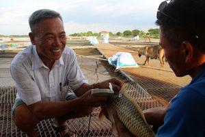 Lão nông cấp 'chứng minh thư' cho cá