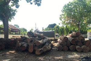 Đắk Nông: Kỷ luật nhiều cán bộ kiểm liên quan đến vụ trùm gỗ lậu Phượng 'râu'