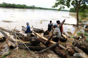 Nghệ An: Người dân từ thượng nguồn đến hạ du liều mình vớt củi lụt