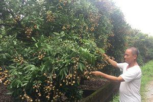Hưng Yên: Không có nhãn 3.000 đồng/kg