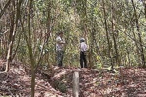 Để mất hơn 130ha rừng thông, chỉ bồi thường, kiểm điểm
