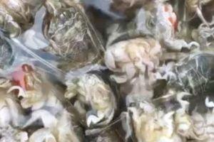 Rù Rì- đặc sản tiểu huỳnh đế 'quéo lưỡi' ngày một hiếm dần