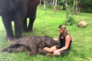 Clip: Nữ du khách không thể ngừng cười khi bị voi con 'tình cảm'