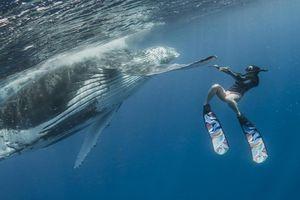 Nghẹt thở khoảnh khắc cá voi 40 tấn đùa giỡn với thợ lặn