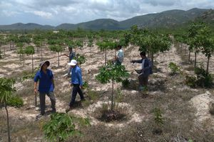 Bình Thuận: Chỉ đạo làm rõ những bất cập trong việc cho thuê đất