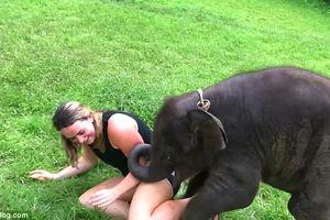 Chú voi con muốn được ôm ấp khiến cư dân mạng chia sẻ điên đảo vì quá đáng yêu